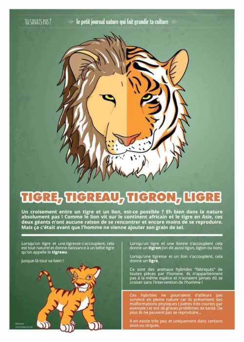 tusavaispas_tigres-8